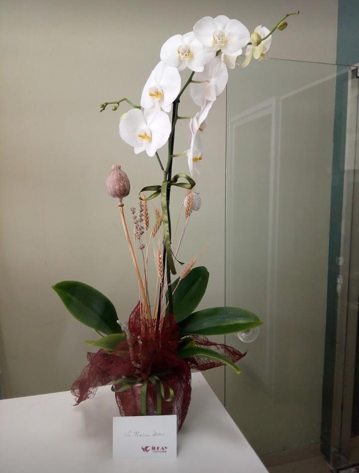 Orkide Guzelligi
