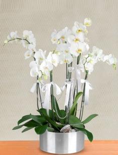 6 Dallı İthal Beyaz Orkide