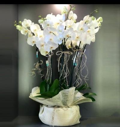 10 dal orkide